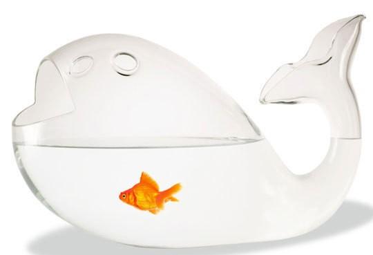 fish fish bowl
